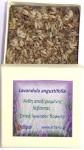 lavender flower 1