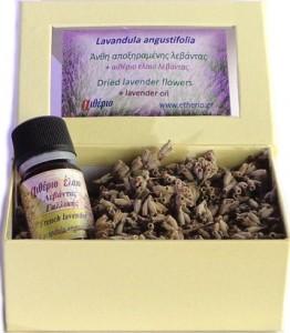 lavender flower 2